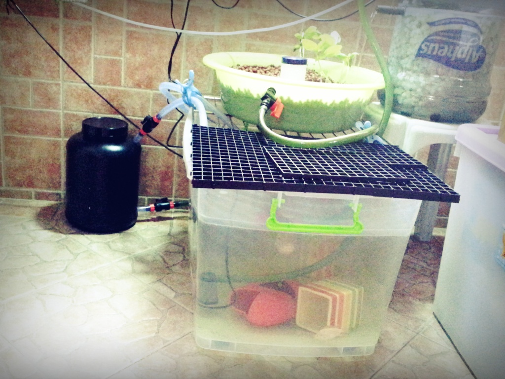 How to build a canister filter for under sgd 30 ninja for How to make a fish tank filter
